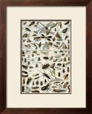 Insectes Prints