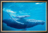 Humpback Mother and Calf Art by Michael S. Nolan
