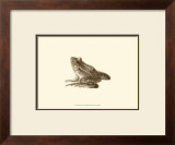 Sepia Frog I Posters by J. H. Richard