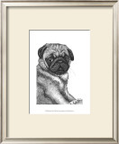 Ralph the Pug Prints by Beth Thomas