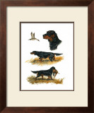 Gordon Setter Prints by Rial