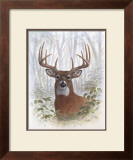 Deer Buck Portrait Posters by Ron Jenkins