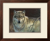 Uninterrupted Stare: Gray Wolf Art by Joni Johnson-godsy