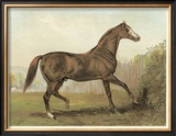Cassell's Horse III Prints by  Cassell