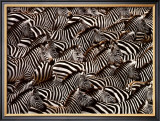 Zebras, Kenya Poster by Art Wofe