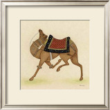Camel from India I Print by Ram Babu