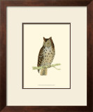 Mottled Owl Posters by Reverend Francis O. Morris