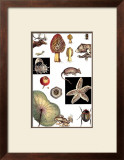 Nature's Curio II Prints
