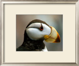 Puffin Profile Framed Giclee Print by Charles Glover