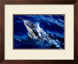 Jumping Dolphin Prints by Charles Glover