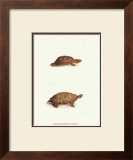 Antique Turtles I Prints by J.W. Hill