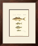 Fish Anthology II Print by Jacob Schmuzer