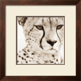 Cheetah Pattern Posters by Frank & Susann Parker