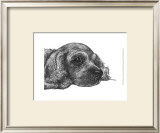 Charlie the Cocker Spaniel Posters by Beth Thomas