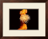 Anemone, Ito Sea Framed Giclee Print by Charles Glover