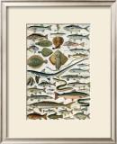 Poissons Prints