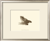 Sepia Frog I Prints by J. H. Richard