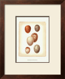 Bird Egg Study III Posters