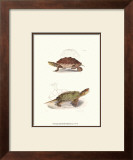 Antique Turtles II Posters by J.W. Hill