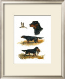 Gordon Setter Posters by  Rial
