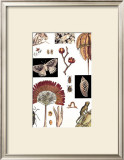 Nature's Curio IV Prints