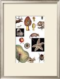 Nature's Curio II Print