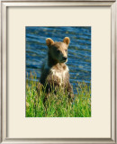 Kodiak Bear Cub Framed Giclee Print by Charles Glover