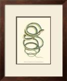 Vibrant Snake II Prints by Frederick P. Nodder