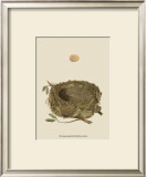 Antique Nest and Egg I Print by Reverend Francis O. Morris