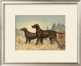 Irish Setter II Prints by Alexander Pope