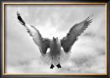 Beach Seagull Landing Framed Giclee Print by Stephen Lebovits