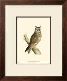 Long Eared Owl Posters by Reverend Francis O. Morris