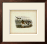 Redcrested Pochard Print by J. G. Keuleman