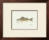 Walleye Fish Prints by Ron Pittard