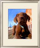 Lab Puppy Prints by Robert Mcclintock