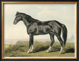 Cassell's Horse II Poster by  Cassell