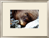 Lazy Day Seal Print by Charles Glover