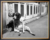 Sitting Dog Print