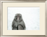 Monkey on Hot Spring Ground Print by Takashi Kirita