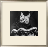 French Tabby Cat Posters by Mesh Gabriella