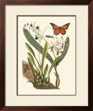 Butterfly and Botanical IV Poster by Mark Catesby