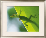 Here's Looking at You Kid Framed Giclee Print by Devon Stevens