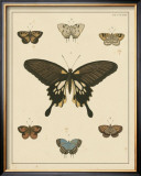 Heirloom Butterflies I Poster by Pieter Cramer