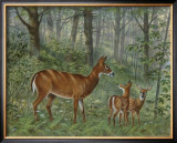 Deer Family I Poster by Ron Jenkins
