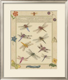 Dragonfly Manuscript III Prints by Jaggu Prasad