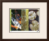 Koi Pond I Limited Edition Framed Print by M.J. Lew