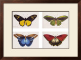 Rain Forest Butterflies Poster by Robert British