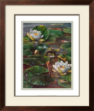 Frog in Lily Pond Posters by  Durgin