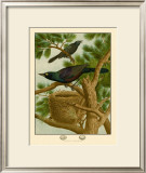 Purple Grackle Print