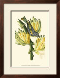 Exotic Birds VII Print by Georges Cuvier